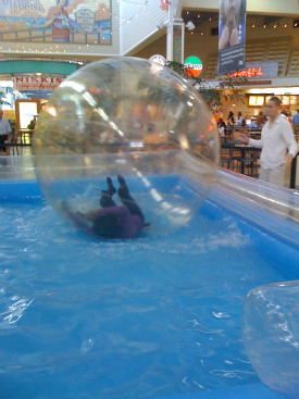 Wambui in Water Ball